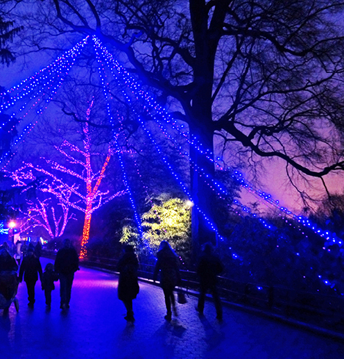 ----zoo_lights.jpg
